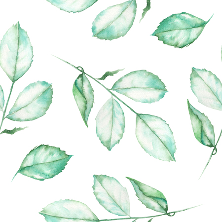 incarnadine: A seamless floral pattern with the watercolor roses leaves on a white background