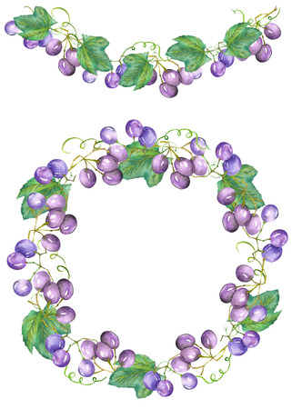 bunches: Frame border, garland and wreath of the bunches of blue red, violet grapes painted in a watercolor on a white background, greeting card, decoration postcard or wedding invitation Stock Photo