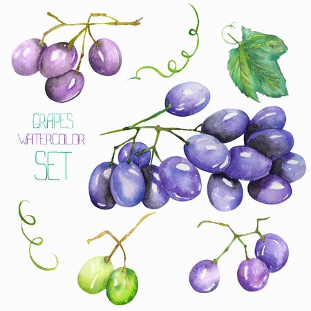 gargle: Image fruit set with the isolated watercolor bunch of grapes, fruit elements. Painted hand-drawn in a watercolor on a white background.