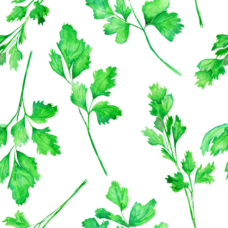 garden stuff: A seamless pattern with the isolated parsley, painted hand-drawn in a watercolor on a white background