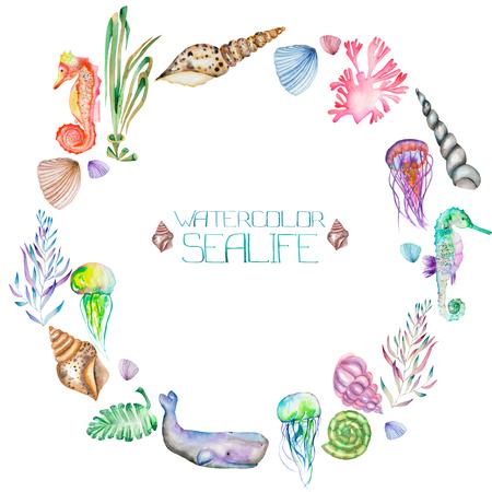 Um quadro da grinalda, círculo com o isolado conchas, cavalos marinhos, água-viva, algas e outros elementos do mar, pintado em uma aguarela sobre um fundo branco