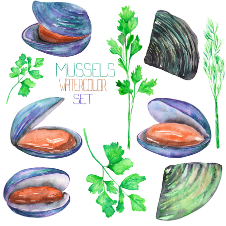 greenery: A set with the isolated watercolor mussels and greenery, hand-drawn on a white background