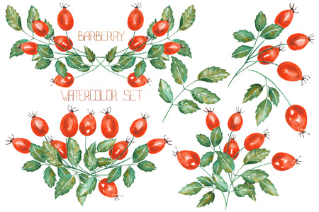 A set of the isolated rosehip branches, hand-drawn in a watercolor on a white background Imagens