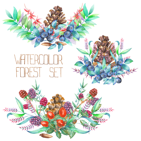 blackberries: A decorative bouquets with the watercolor forest elements: blackberries, barberries, cones, branches and blueberries, on a white background, for a greeting card, a decoration of a wedding invitation