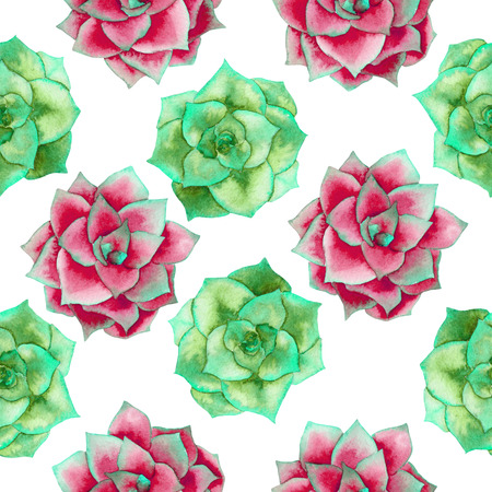 florescence: A seamless pattern with the watercolor red and green succulents, hand-drawn on a white background