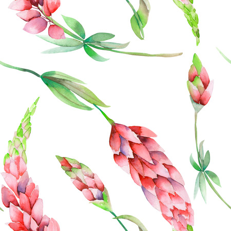 floristics: A seamless pattern with the isolated watercolor red lupine flowers, hand-drawn on a white background