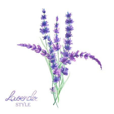 Ilustrace s kyticí krásné akvarel levandule větví, izolované ručně kreslené v akvarel na bílém pozadí