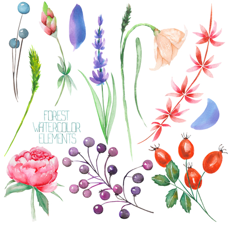 A set, collection with the floral isolated watercolor forest elements (berries, lavender, wildflowers and branches) on a white background Stock Photo