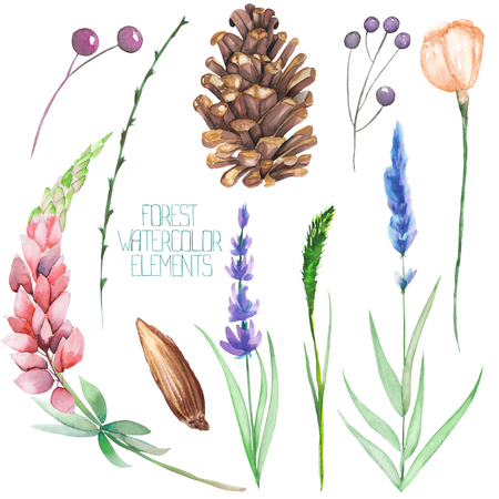 A set, collection with the floral isolated watercolor forest elements (berries, cones, lavender, wildflowers and branches) on a white background