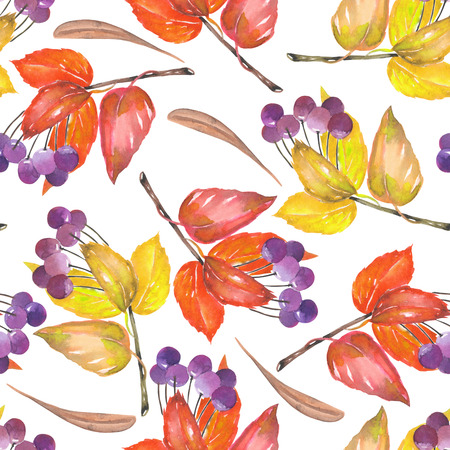 viburnum: A seamless pattern with a floral ornament of the watercolor red and yellow autumn leaves and purple berries on the branches, viburnum tree on a white background Stock Photo
