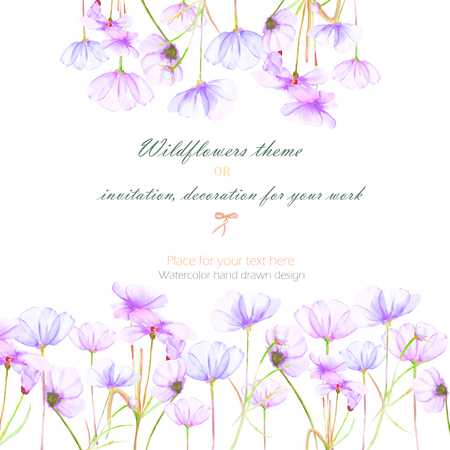 cosmos flower: Background, invitation card, template postcard with the tender purple cosmos flowers, hand drawn on a white background, background for your card and work