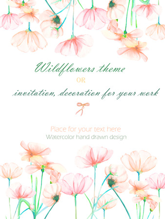 cosmos flower: Background, invitation card, template postcard with the tender pink cosmos flowers, hand drawn on a white background, background for your card and work