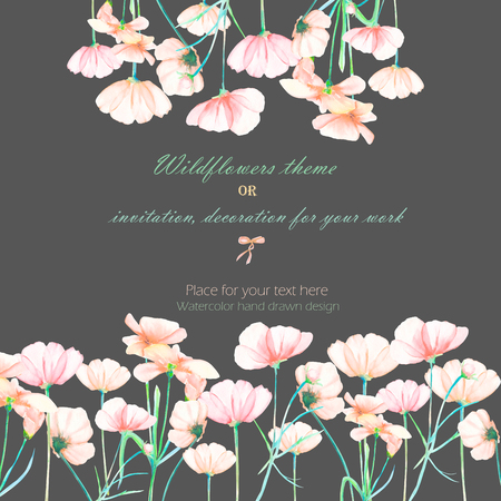 cosmos flower: Background, invitation card, template postcard with the tender pink cosmos flowers, hand drawn on a dark background, background for your card and work