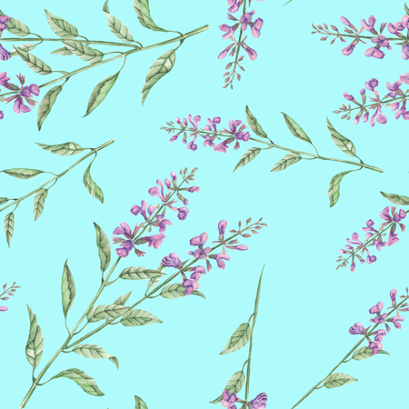 phytology: Seamless floral pattern with salvia flower, hand drawn in watercolor on a blue background Stock Photo