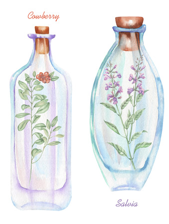 cowberry: Illustration romantic and fairytale watercolor bottles with salvia flowers and cowberry branch inside, hand drawn isolated on a white background