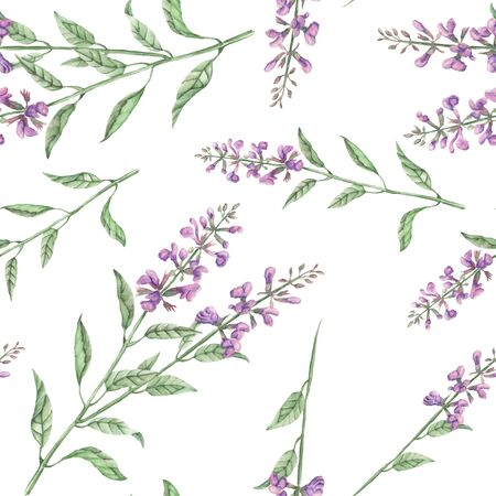 phytology: Seamless floral pattern with salvia flower, hand drawn in watercolor on a white background Stock Photo