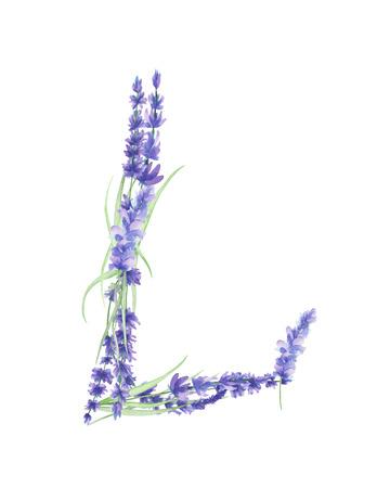 Velké písmeno L akvarel levandulových květů, izolovaných ručně kreslenými na bílém pozadí, svatební design, anglická abeceda pro slavnostní a svatební výzdobou a karet