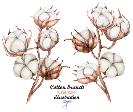 Collection of illustrations of watercolor cotton flowers branches, hand drawn isolated on a white background