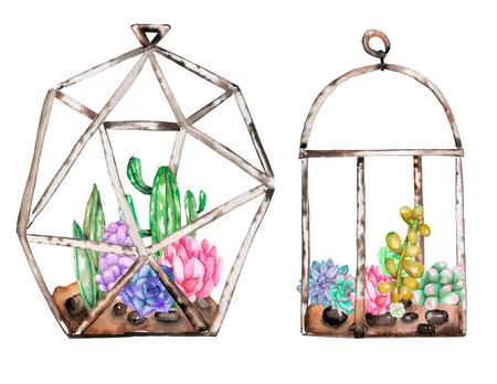 수채화 succulents와 cuctuses 안에 florariums의 컬렉션, 흰색 배경에 고립 된 손으로 그린