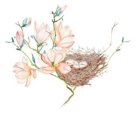 Illustration of the watercolor bird nest with eggs on the magnolia tree branches, hand drawn isolated on a white background Stock Photo