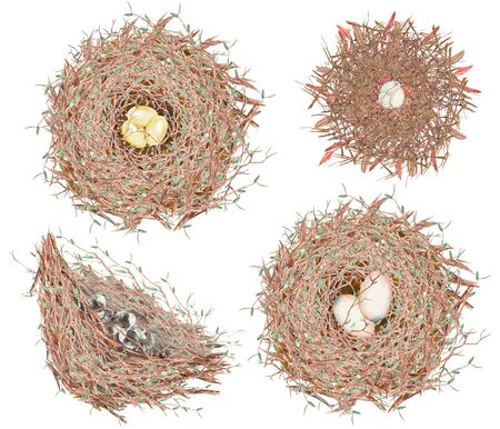 feathery: Set, collection of the watercolor bird nests with eggs, hand drawn isolated on a white background Stock Photo