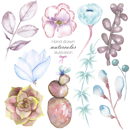 florescence: Set with the isolated watercolor floral elements: succulents, flowers, leaves and branches, hand drawn on a white background, for self-compilation of the bouquets and ornaments