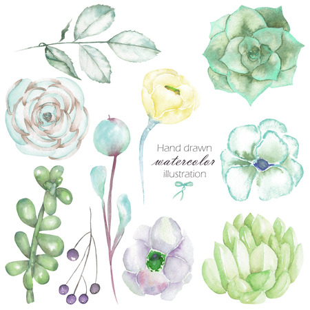 peyote: Set with the isolated watercolor floral elements: succulents, flowers, leaves and branches, hand drawn on a white background, for self-compilation of the bouquets and ornaments