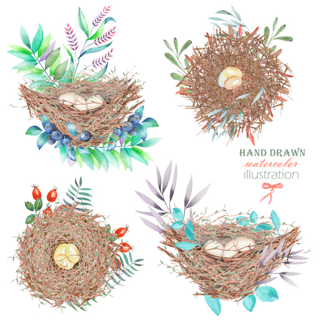 feathery: Set, collection of the watercolor bird nests with eggs, in plants and berries, hand drawn isolated on a white background