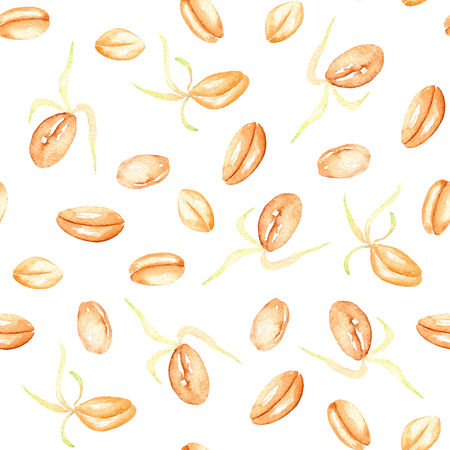 Seamless pattern with sprouted wheat grains hand drawn in watercolor on a white background Reklamní fotografie