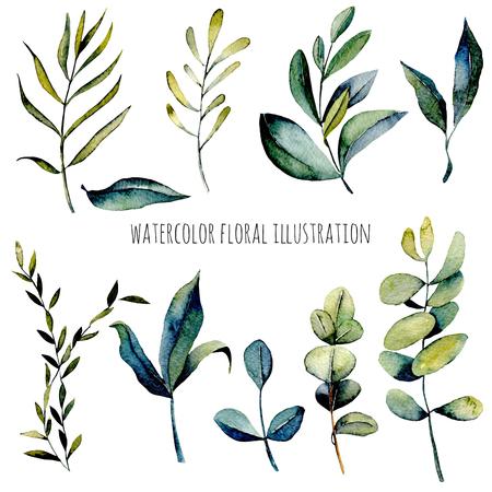 結婚式招待状の装飾のグリーティング カードのための白い背景の上分離された水彩ユーカリの枝と他の緑色植物のイラストは、手描きのセット