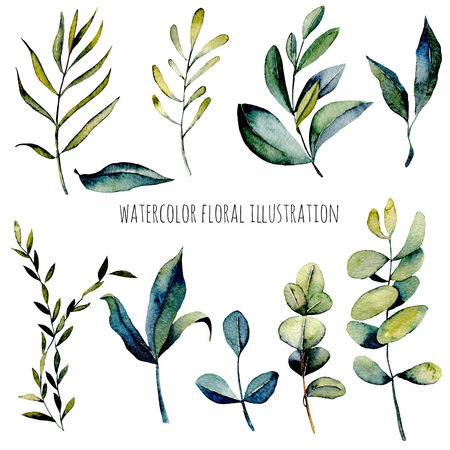 Set of watercolor eucalyptus branches and other green plants illustration, hand drawn isolated on a white background, for a greeting card, decoration of a wedding invitation Stockfoto