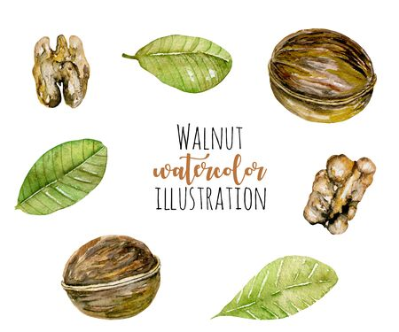 Set of watercolor walnuts elements, hand painted isolated on a white background