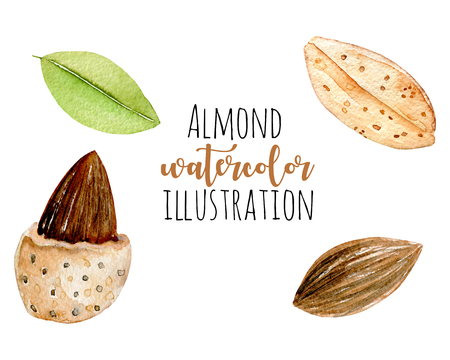 Set of watercolor almond elements, hand painted isolated on a white background Kho ảnh