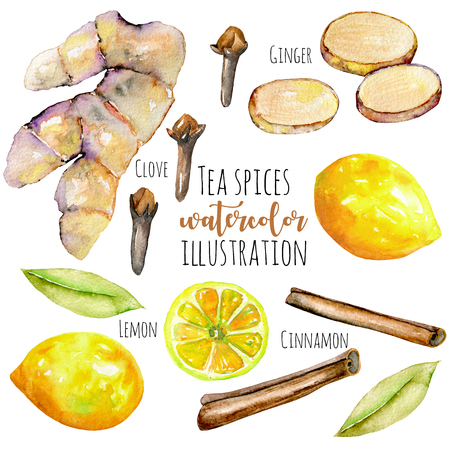 Set of watercolor ginger, lemon and spices elements, hand painted isolated on a white background
