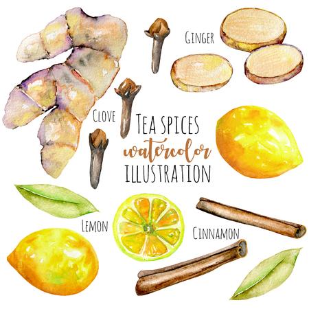 Suluboya zencefil, limon ve baharatlar elemanları, el boyalı beyaz bir arka plan üzerinde