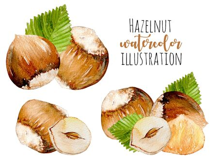 Set of watercolor hazelnuts elements, hand painted isolated on a white background