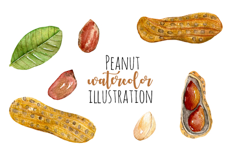 Set of watercolor peanut elements, hand painted isolated on a white background