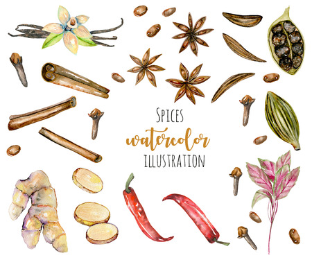 Set of watercolor spices (cinnamon, anise, caraway, cardamom, basil, red pepper, ginger, vanilla and cloves), hand drawn isolated on a white background Stock Photo
