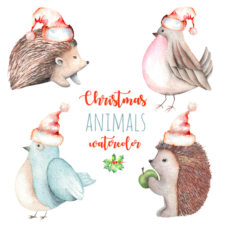 Set of watercolor cute Christmas birds and hedgehogs illustrations, hand drawn isolated on a white background