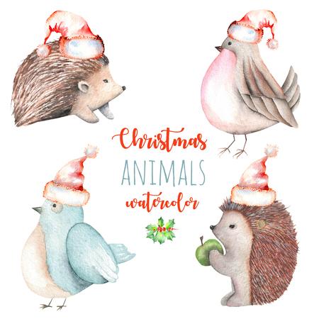 Suluboya şirin Noel kuşları ve kirpi resimleri çizimleri, el çizilmiş beyaz bir arka plan üzerinde çizilmiş Stok Fotoğraf