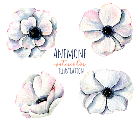 Watercolor white anemone flowers illustrations, hand painted isolated on a white background