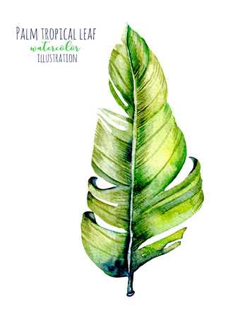 Watercolor palm tropical green leaf illustration, hand painted isolated on a white background Stock Photo