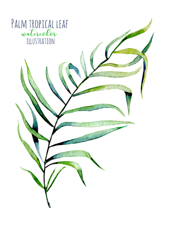 Watercolor palm tropical green branch illustration, hand painted isolated on a white background Stock Photo
