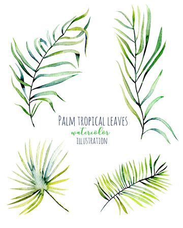 Watercolor palm tropical green branches illustrations, hand painted isolated on a white background