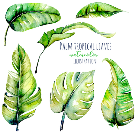 Watercolor palm tropical green leaves illustrations, hand painted isolated on a white background Stock Photo