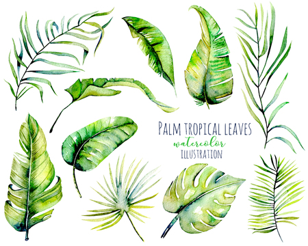 Watercolor palm tropical green leaves and branches illustrations, hand painted isolated on a white background Stock Photo