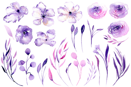 Set of watercolor purple roses, rhododendron flowers and branches, floral elements illustration, hand drawn isolated on a white background, for a greeting card, decoration of a wedding invitation