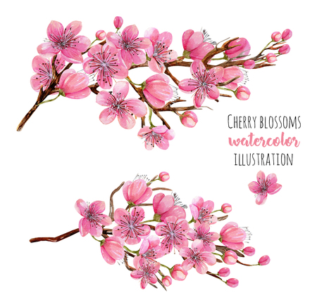 Watercolor spring blooming cherry tree branches illustration, hand painted isolated on a white background
