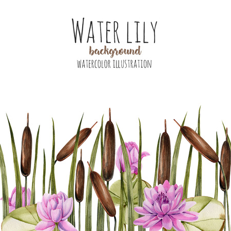 Watercolor bulrush and pink lotus background, greeting card template, artistic design background, hand painted on a white background