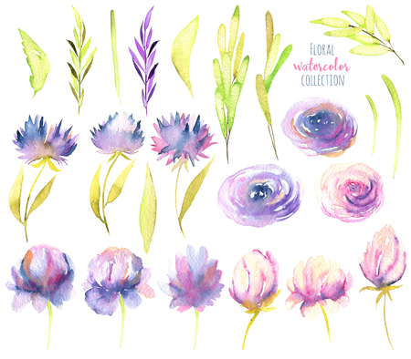Watercolor pink and purple peony, roses, asters and greed branches collection, isolated elements set, hand painted on a white background Banco de Imagens